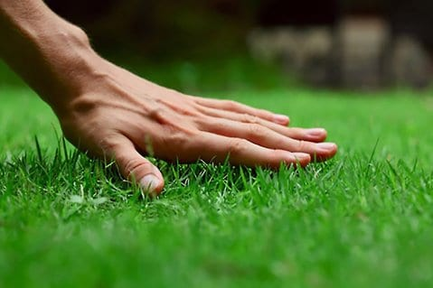 lawn care hand