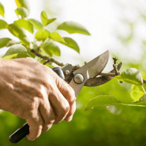 tree and shrub care prune your trees