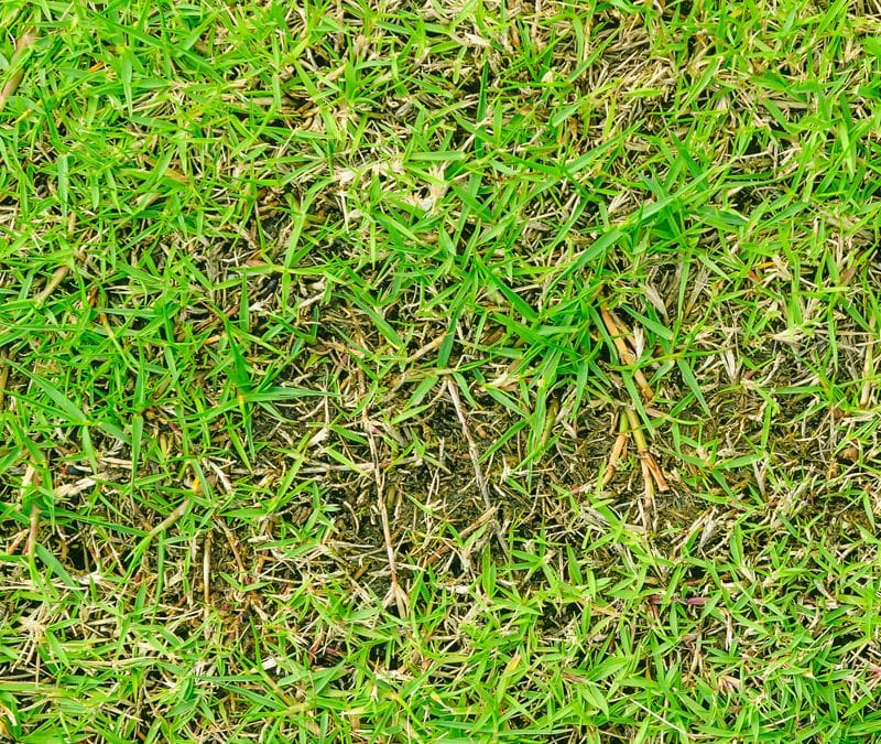 ways to prevent lawn disease