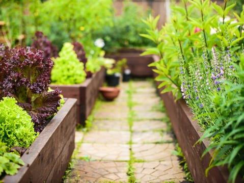 bed weed control service