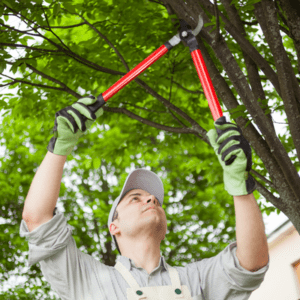 man holding trimmers trimming tree branch